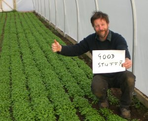 Paul and a polytunnel full of purslane